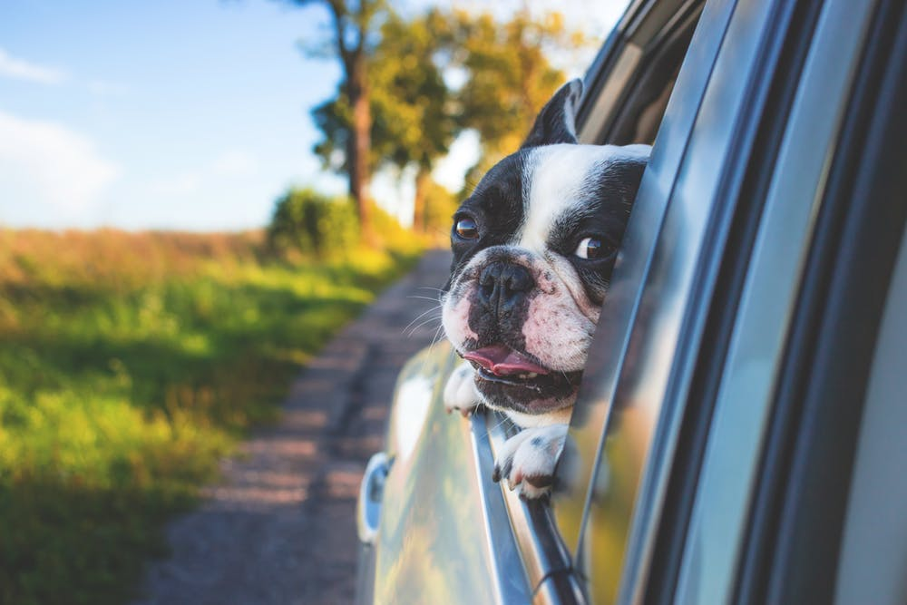 how to pcs with pets - summer pet travel tips